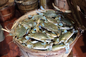 A bushel of lively blue crabs, harvested by Southern Maryland watermen.