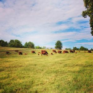 At Last Farm